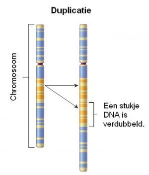 Chromosoom-duplicatie